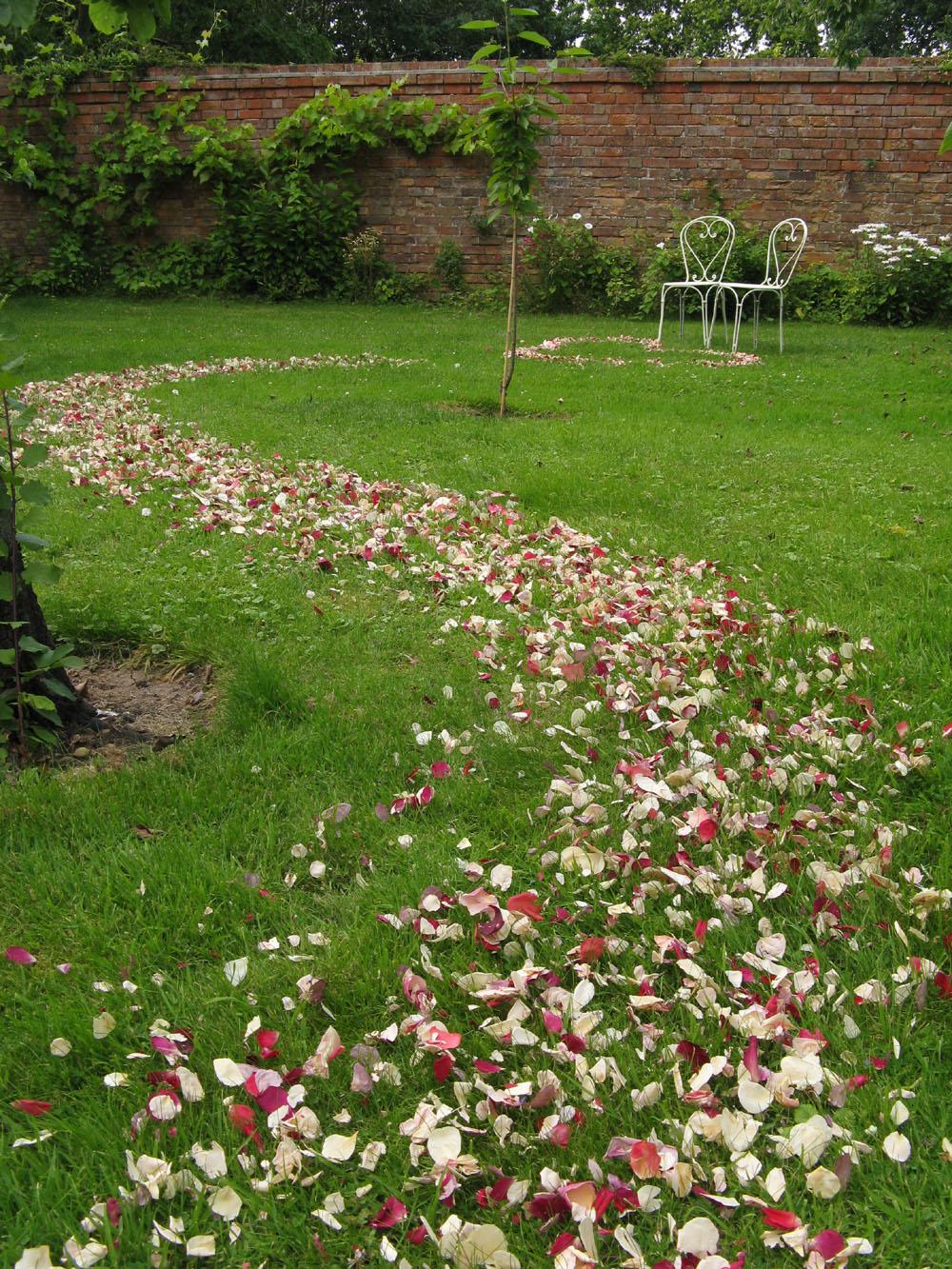 Flower petals - wedding aisles and petal pathways: Rose petal pathway on grass