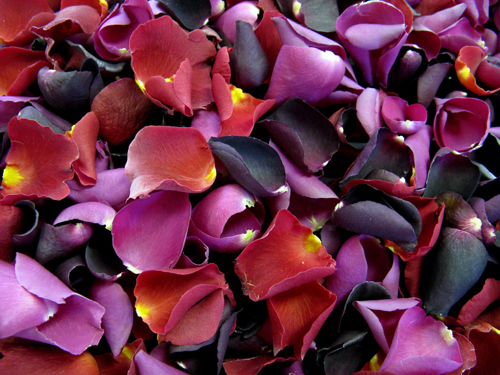 Petal Confetti - Blackcurrant, Red and Cerise Large Natural Rose Petals