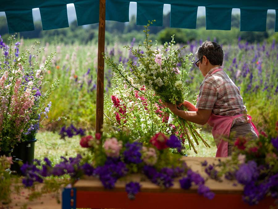 Making flower bunches, 2019, Wyke Manor Estate, Worcestershire