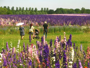 people visiting the confetti flower field