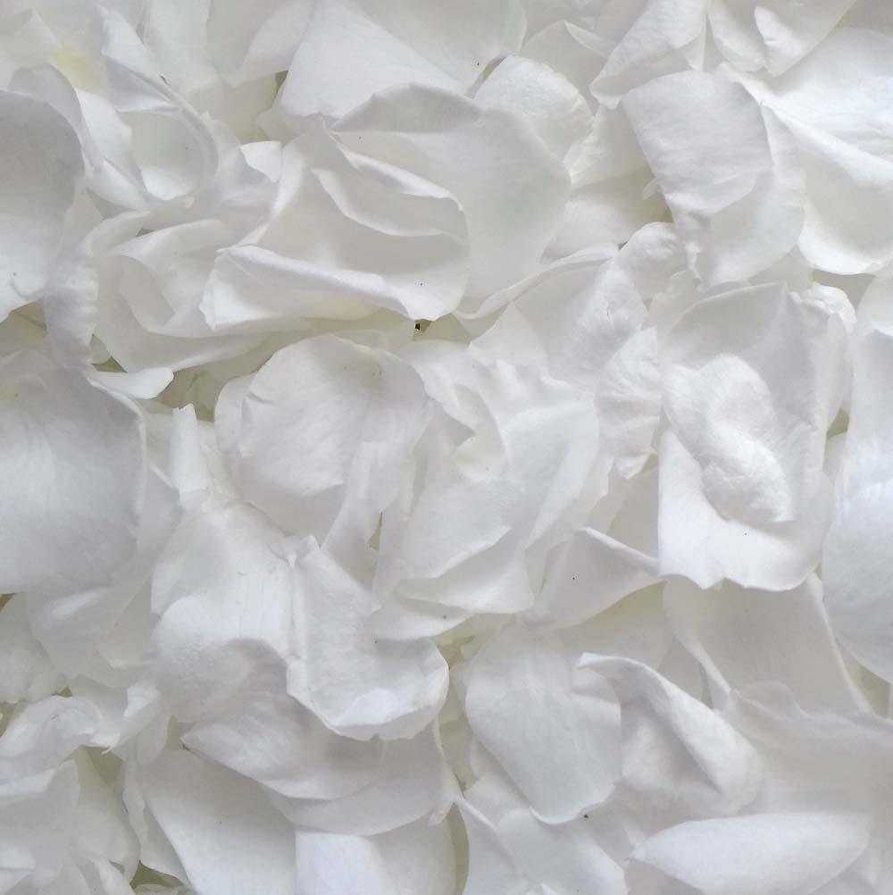 White Rose Petals - Snow White Large Coloured Rose Petals