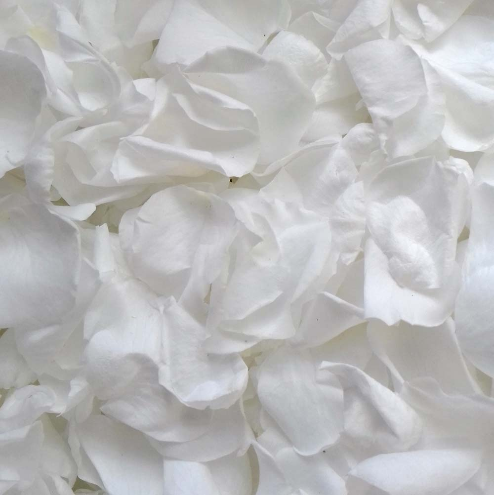 White Rose Petals - Snow White Large Coloured Rose Petals