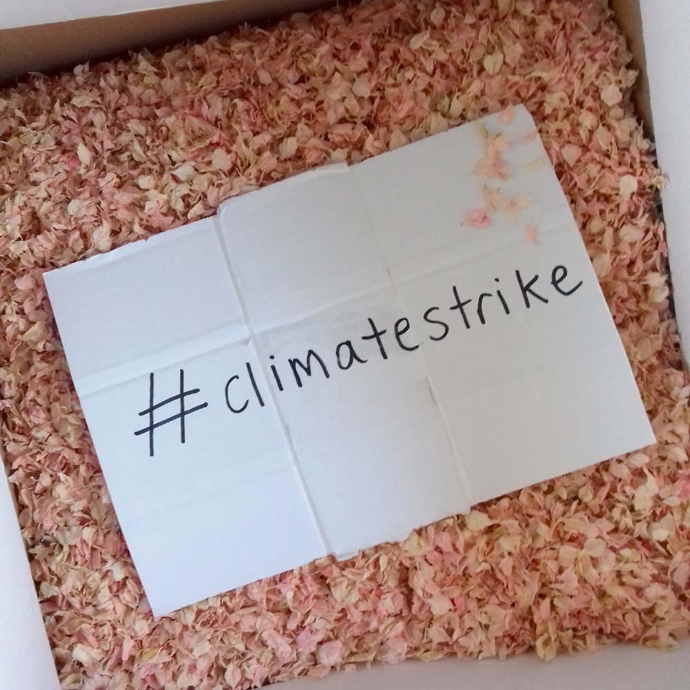 Delphinum petal confettiwith sign - #climatestrike