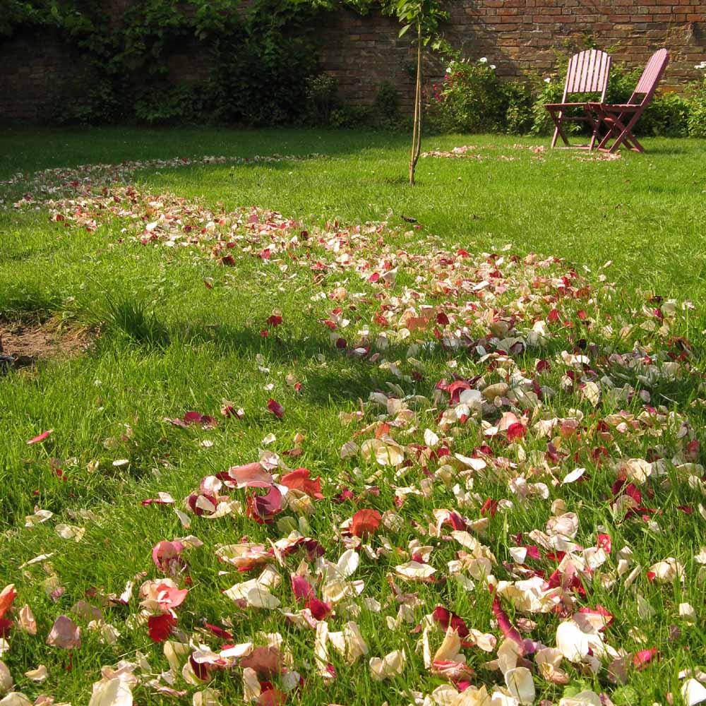 Rose Petal Pathway with Rainbow Small Natural Rose Petals