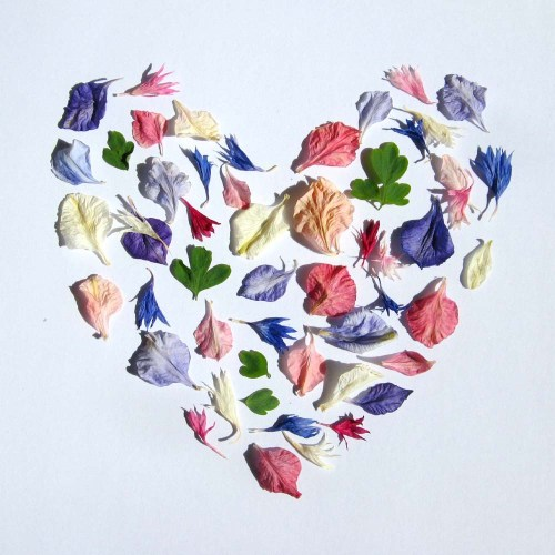 Pretty petals - a heart shape of natural confetti