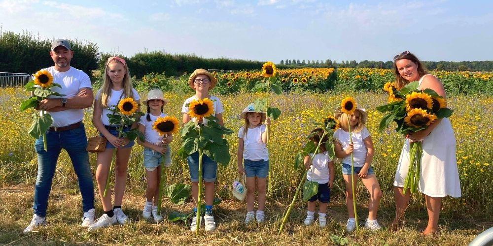 A family of sunflowers! Confetti Flower Field 2020.