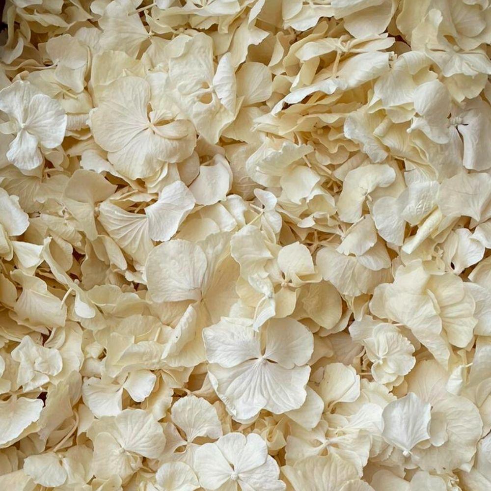 cream hydrangea petals