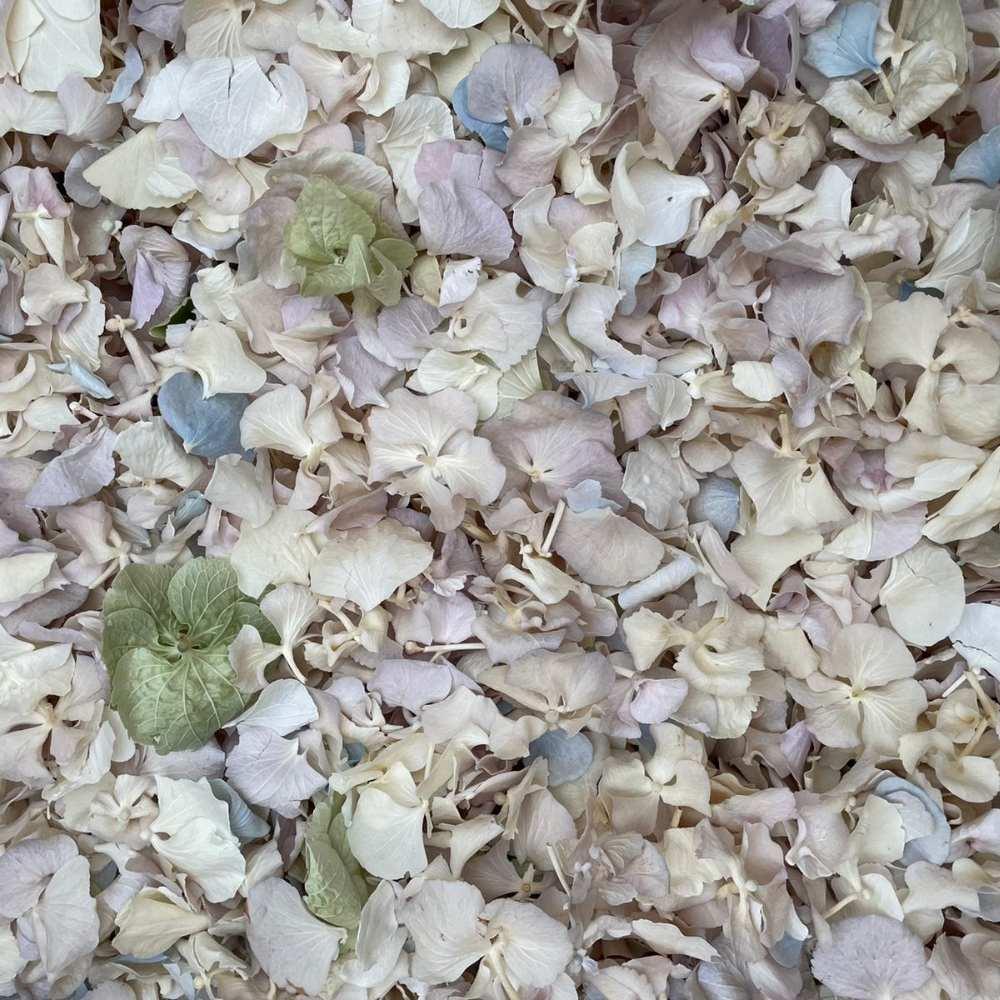 free hydrangea petals
