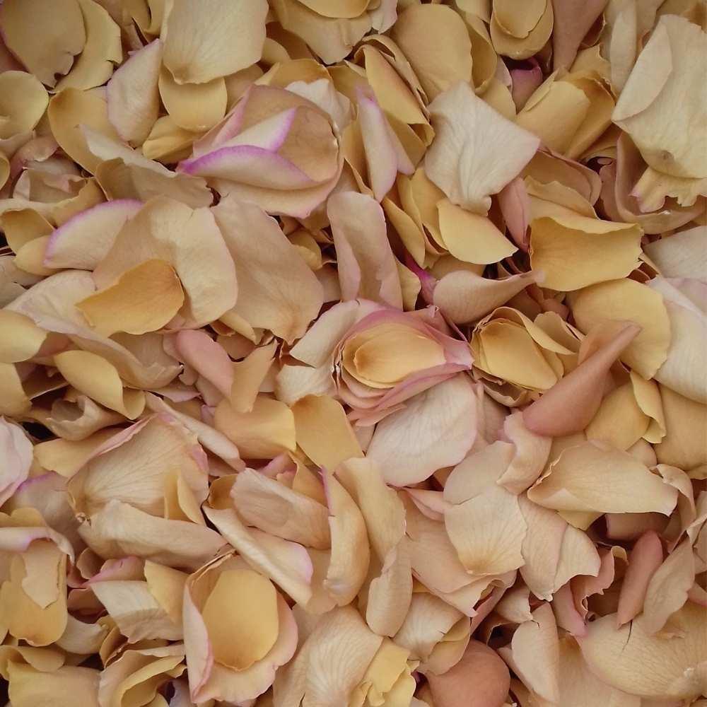 Autumn Gold Large Natural Rose Petals