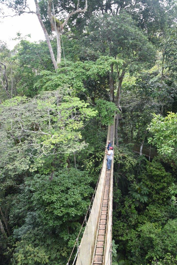 ExplorNapo is on Sucusari Creek off the Napo River (not the Amazon River). To get there we take a shortcut from the Amazon to the Napo by docking in ... & Take an Amazon Rainforest Canopy Walk - Confetti Travel Cafe