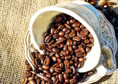 Productores de café y cacao mantienen producción pese a COVID-19