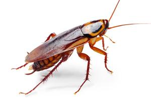 come eliminare gli scarafaggi in casa - confronta-preventivi.it - Come Eliminare Gli Scarafaggi In Cucina