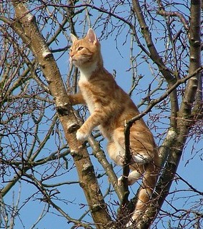 cat-650420_640crop