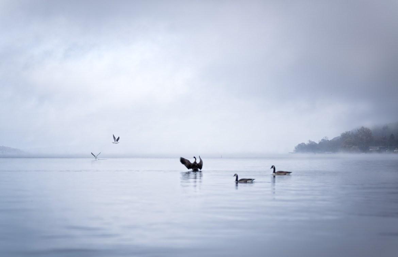 Geese Cayuga Lake en el estado de New York, Finger lakes Area