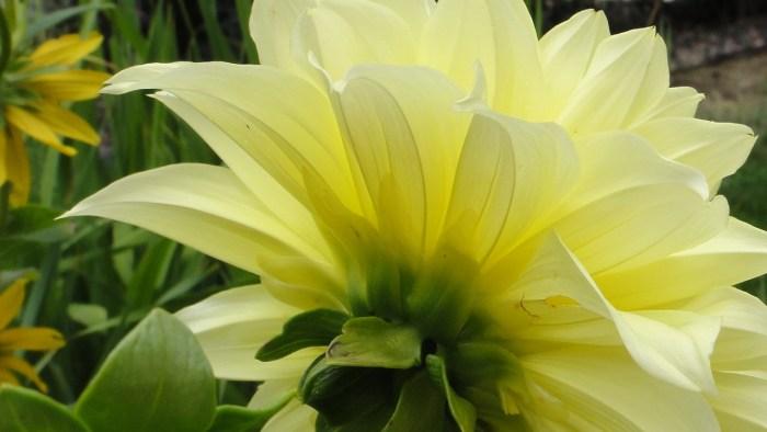 Blossom with Reiki