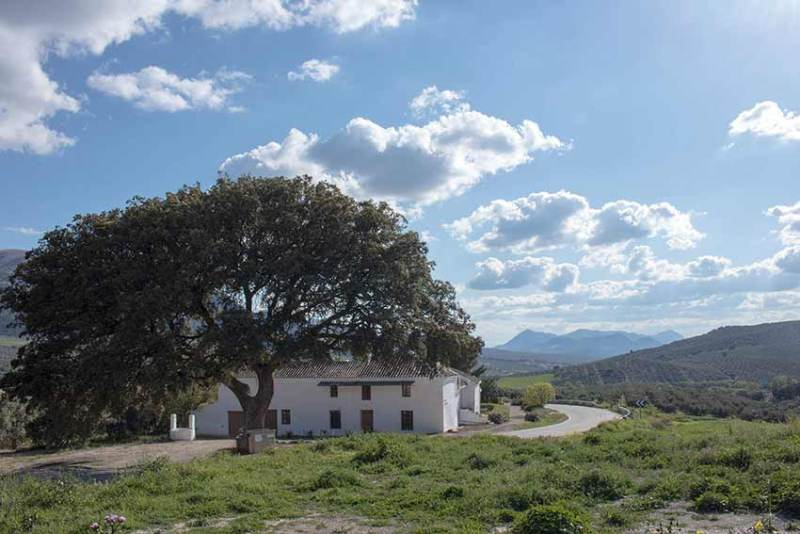 Cortijo Los Lobos – Horse riding holidays in Andalucia