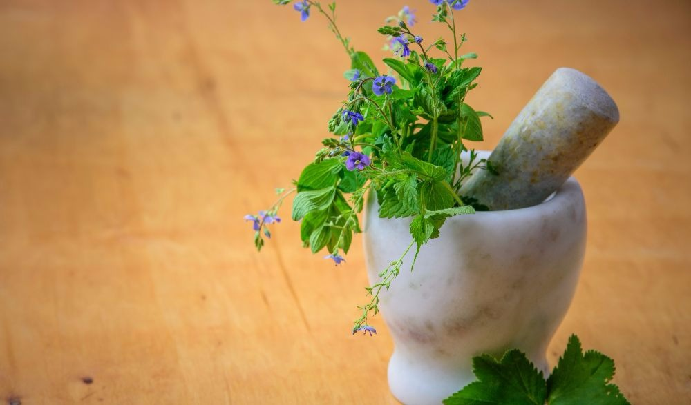 Beat UTI And Have The Upper Hand With These Plants