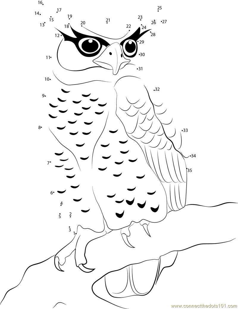 Spot Bellied Eagle Owl Dot To Dot Printable Worksheet