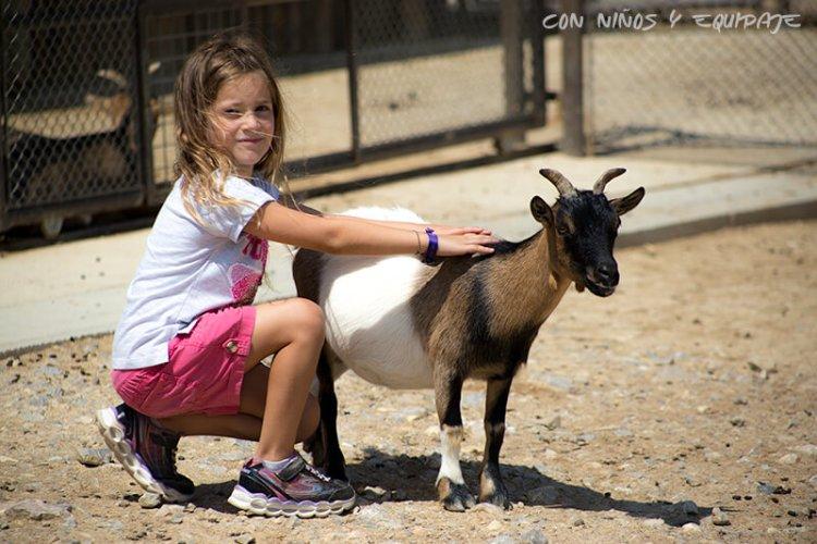 Reserva Africana de Sigean - zona de cabras