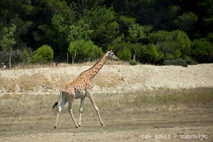 Reserva Africana de Sigean