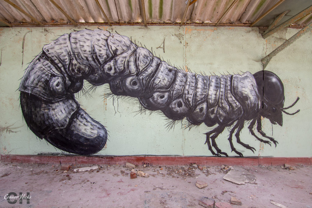 Roa graffiti gent 1024x683 Skeleton Warehouse, Belgium