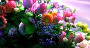 Regalar flores siempre es un acierto