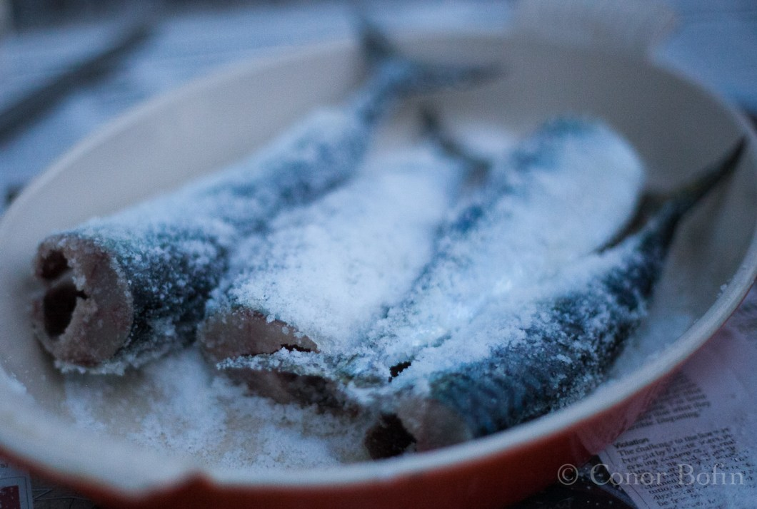Arty fish fillets in salt and sugar dry brine. A gratuitous fish shot if ever there was one.