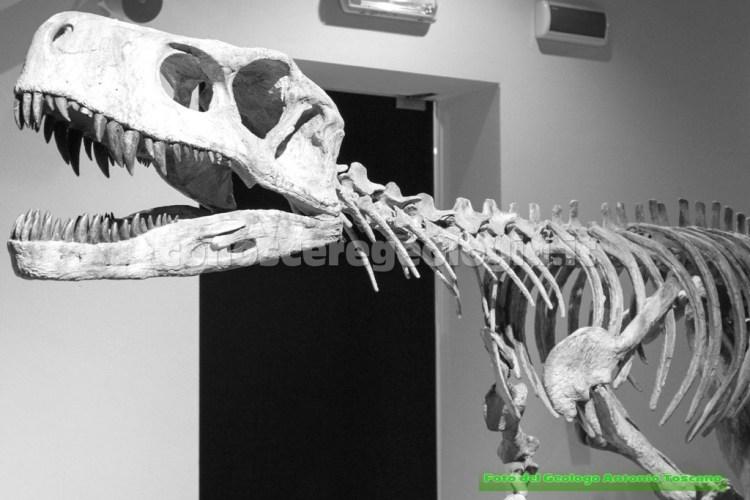 Frenguellisaurus ischigualastensis