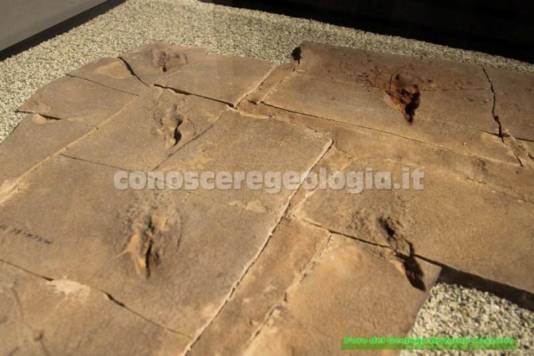 Tracce di impronte fossilizzate
