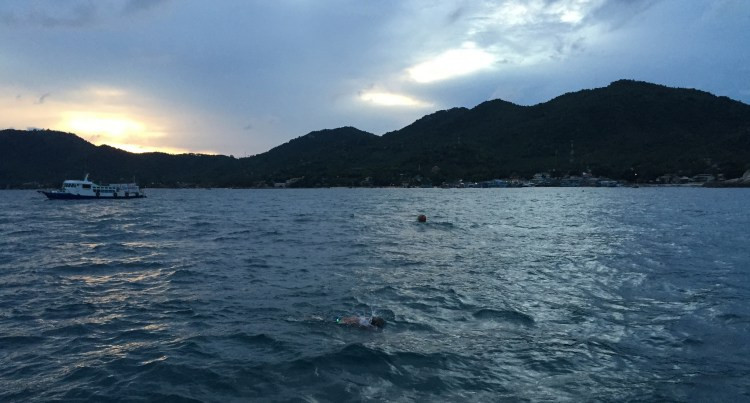 Dawn Shark Conservation Swim Project Aware