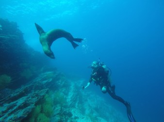 Sea Lion - Diving Galapagos