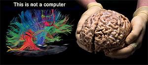 Tastbare hersenen en een uitbeelding van actieve neurale circuits.