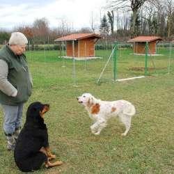 Comment faire le bon choix de sa pension pour chien ?