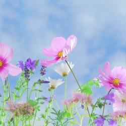 Fleurs jardin sauvage
