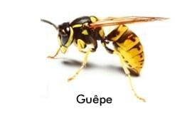Société de désinsectisation spécialisée destruction Nid de Guêpes.