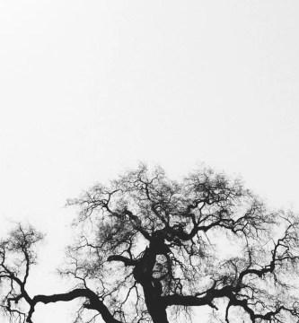 El árbol que no servía para nada - Reflexión de autoestima (2)