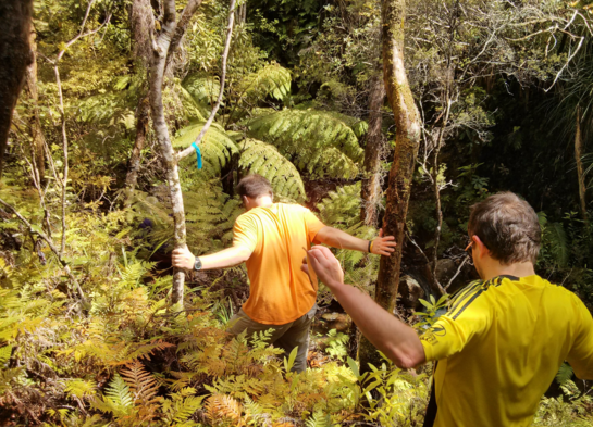 Volunteers hike amongst ferns while following a trap line in the Coromandel, New Zealand.