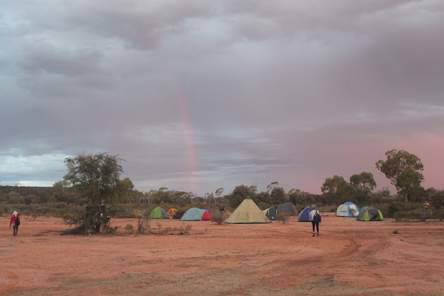 Students tenting in the outback at Idalia National Park where an endangered bridled nail tail wallaby monitoring program has been ongoing for more than 20 years. Credit: Anne Goldizen.
