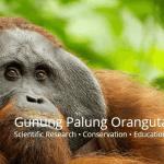 Gunung Palung Orangutan Project