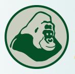 Gorillas Gabon