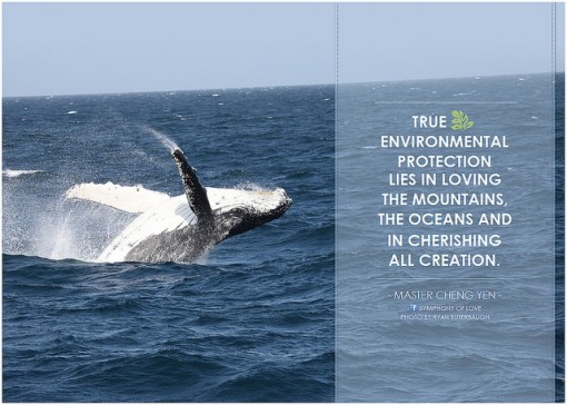 Conservation Environmental Quotes