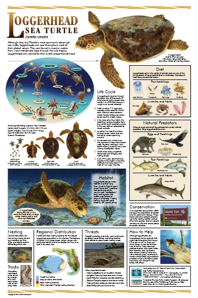 history posters sea turtle conservancy