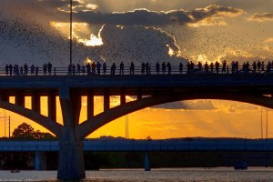 Onlookers watch as Mexican free-tailed bats exit the Congress Avenue Bridge.  © Justin Boyle