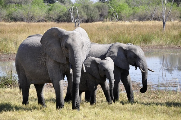 New Jersey is the first US state to take a stand against the cruel ivory and rhino horn trade, banning all such items in a new law passed Tuesday. (Photo : Pixabay)