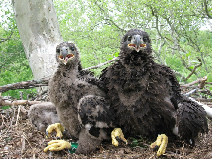 1 - 1 Eagles 008(1)