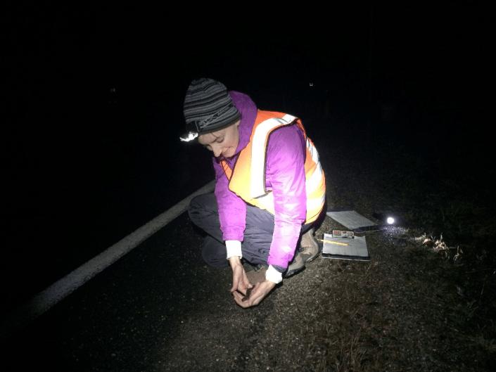 A volunteer assists in CWF Amphibian Crossing Project. Photo by Kelly Triece.