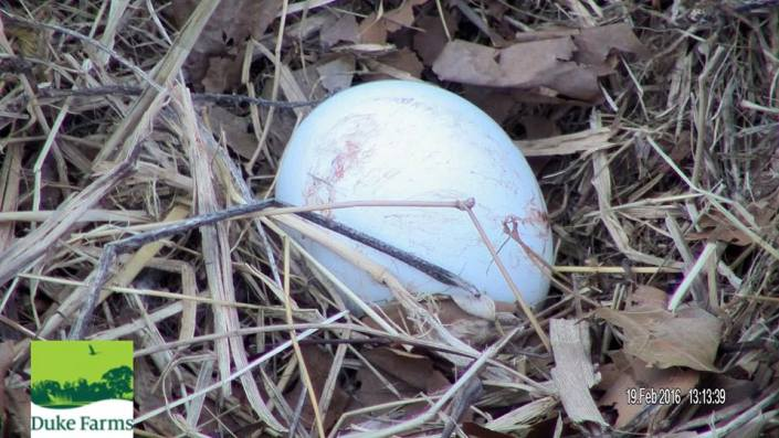 Close-up of the first egg this season by Duke Farms.