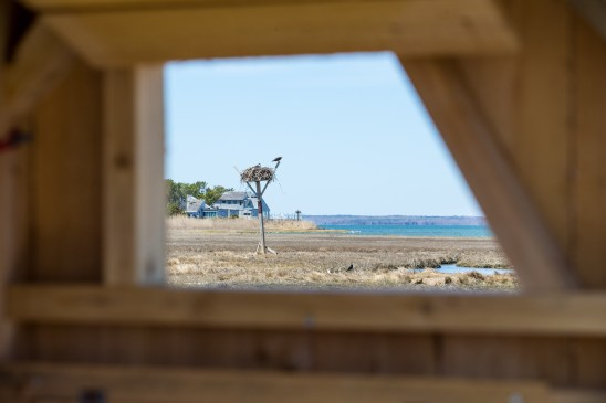 The view from the Osprey Blind. Photo by Kyle Gronostajski.