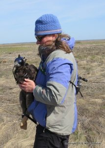 Larissa holding an eagle at a banding last week.