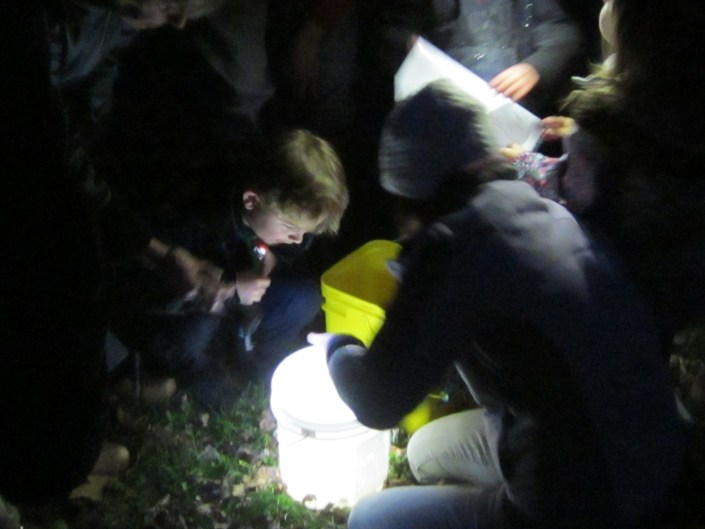 Examining the wildlife found in the vernal pool after dark.